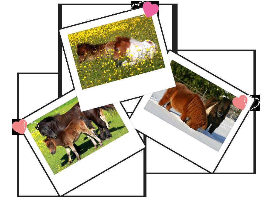 Paarden die gemist worden